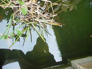 jordimargi | retrato acuatico | Parc de La Tamarita - BarCeloNa -