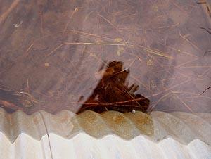 Allan O'Marra   Abstract Reflection   Maxwell Settlement, Ontario, Canada