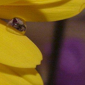 myla   Rhiannon's Reflective Flower Bubble   Redmond, WA