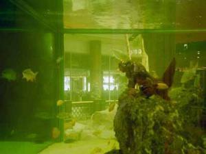 walter | aquarium | london, uk