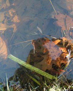 Jackie Sullivan   Pond Edge   Pond, Home, NY