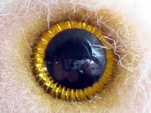 Gette | I've got my eye on you | Kuching, Sarawak, Malaysia