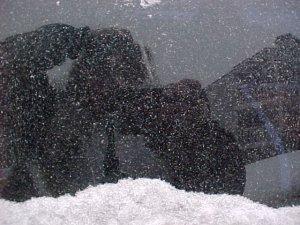 myla | snowflakes | redmond, wa