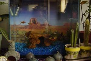 April B | New Digs for Yngwie the Piranha | Missoula, MT