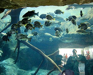J Bainbridge | Fish. Me. Who knew. | Florida Aquarium. Tampa, Florida.