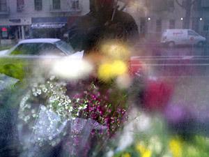 Jeffrey Shay | flowers/snow/umbrella | nyc, ny