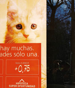 Balthusar Alvarez | Another feline | Oviedo,  northern Spain