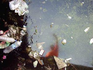 Pau   Infected puddle   Vinar�s, Spain