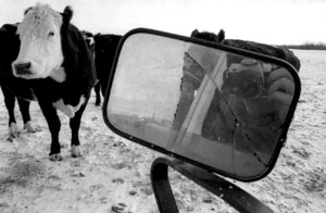 troy | the cow and i | fort qu'appelle, saskatchewan