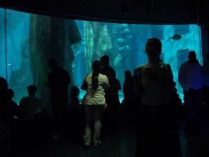 lucy spink | The London Aquarium | Southbank, London