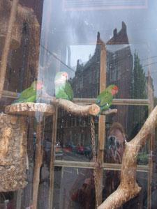 Jeroen   Queen's day 2005   Amsterdam