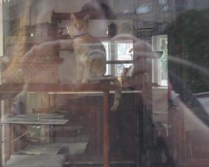 Karen Barkan | La Jolla Guard Cat | La Jolla, CA
