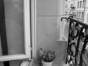 Lyse | windowsill | Switzerland