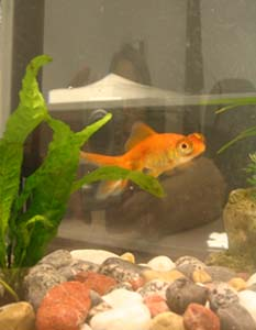 lizzy | Reflecto-fish | chicago, illinois