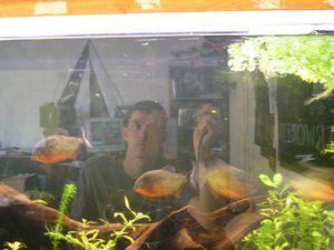 n�de | me and my piranhas | france