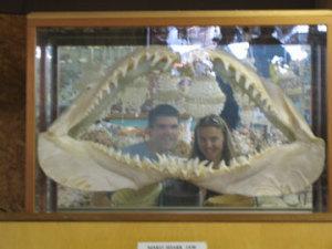 Julie Andersen | eaten by a shark! | SLO, CA