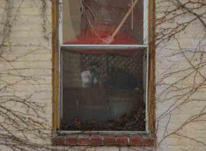 Matthew J   Baltimore Window   Baltimore, MD