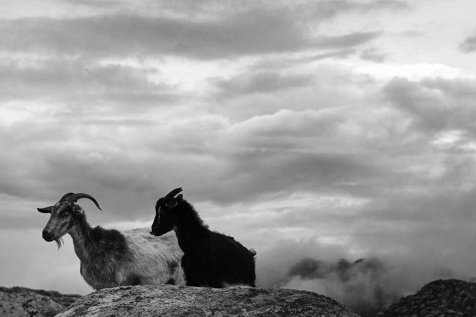 Mykonos Biennale 2015 - Film Festival -  Katsikoland - Apathia Amalphia - screen shot