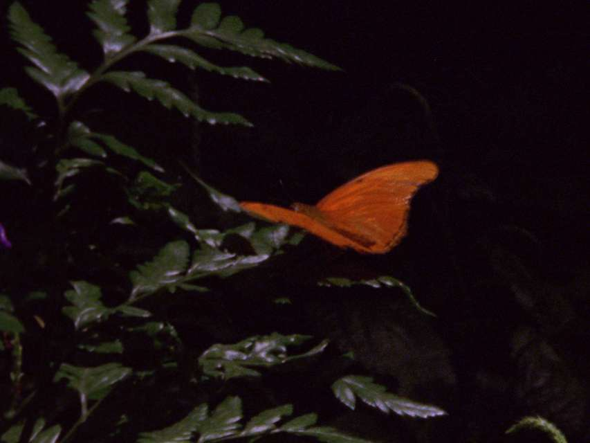Mykonos Biennale 2015 - Film Festival -  Orange Butterfly - screen shot