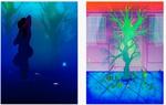 """The Garden of Waterlilies"" Poster"