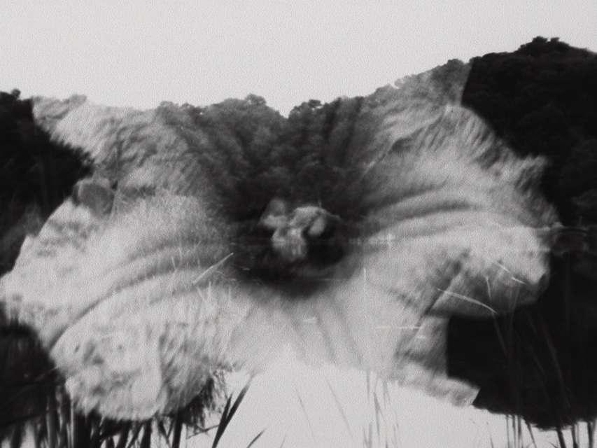 Mykonos Biennale 2015 - Film Festival -  Light Study - screen shot