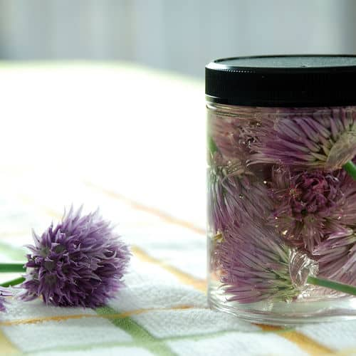 Chive blossom infused vinegar