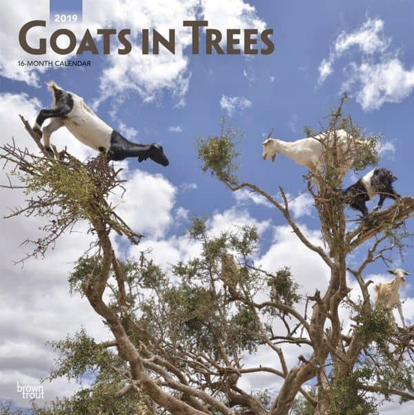 Niches goats in trees