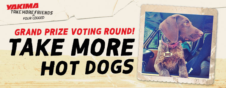 Dog Days of Summer - Voting Round