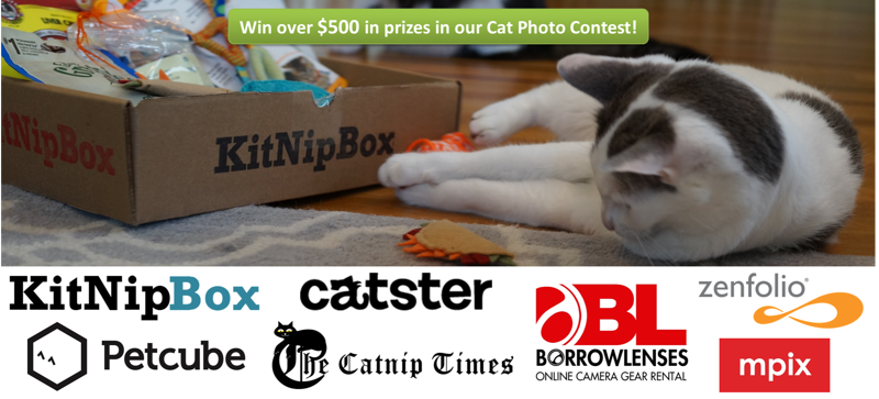 Win over $500 in prizes in our Cat Photo Contest!