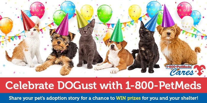 PetMeds DOGust Birthday Sweepstakes!