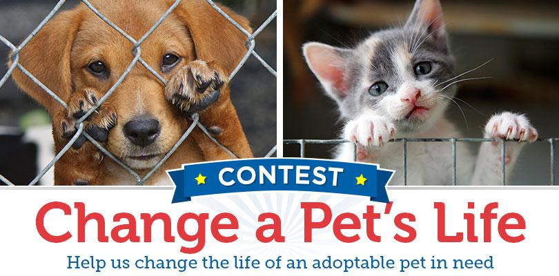 PetMeds Change a Pet's Life Contest| 2016