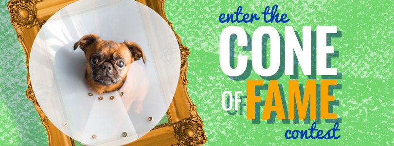 Enter the Cone Of Fame Contest