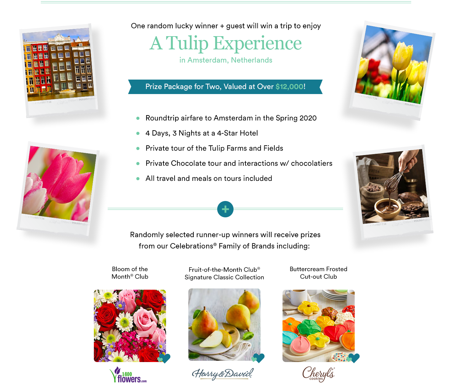 Tulip Experience Banner