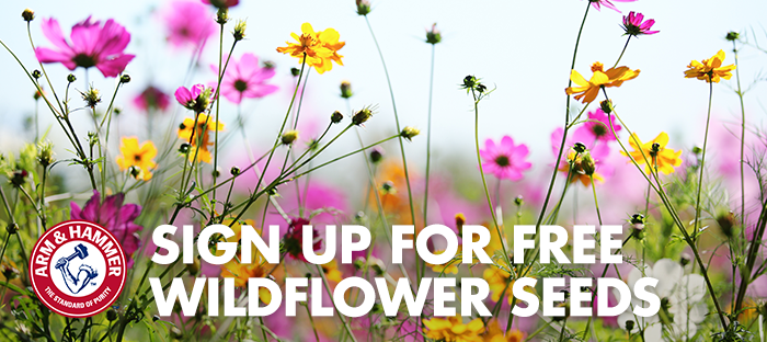 FREE Wildflower Seeds...