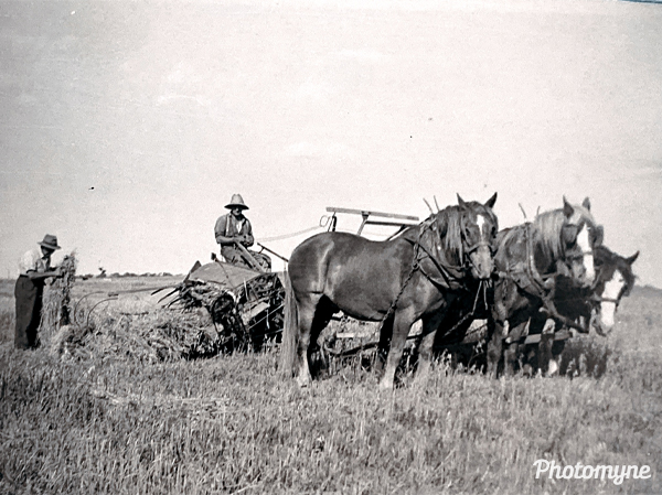 Cutting hay before any tractor was around. Australia