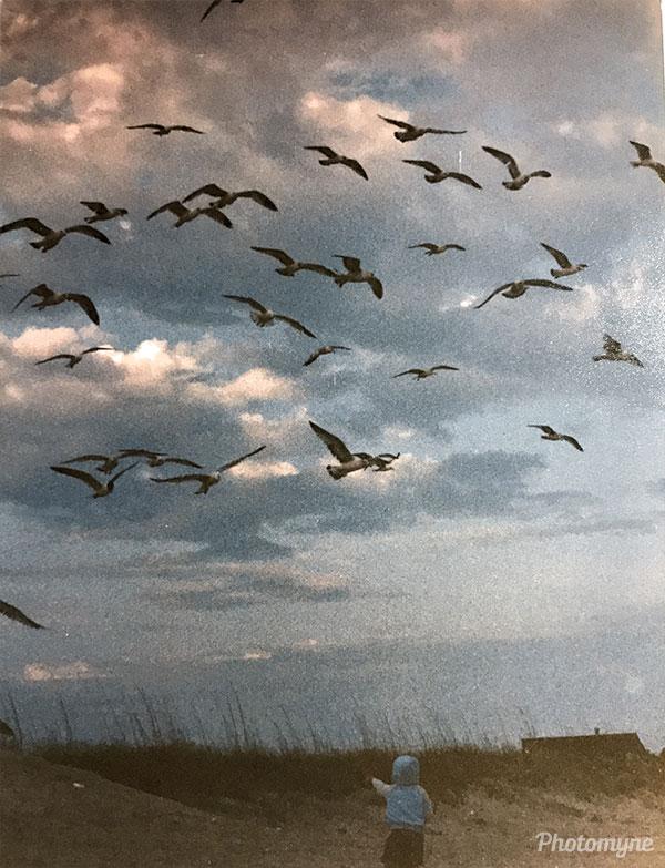 Ryan and the seagulls. USA 1988