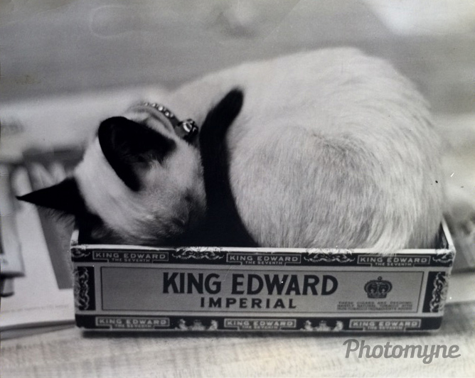 Melissa II, our Siamese cat in her favorite spot, 1980