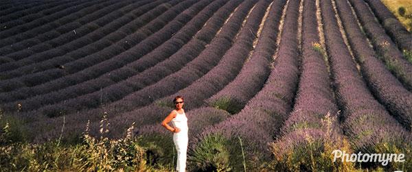 Lavenders. Provence, France 2000