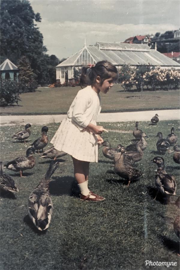 Feeding the ducks. New Zealand 1965