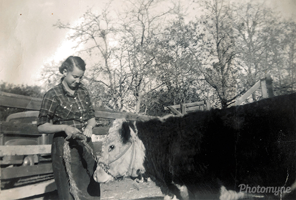 My mom as a teen with one of her many steers. She never let me have one...hurt horses, sheep, rabbits and chickens, but NEVER a steer. USA 1953