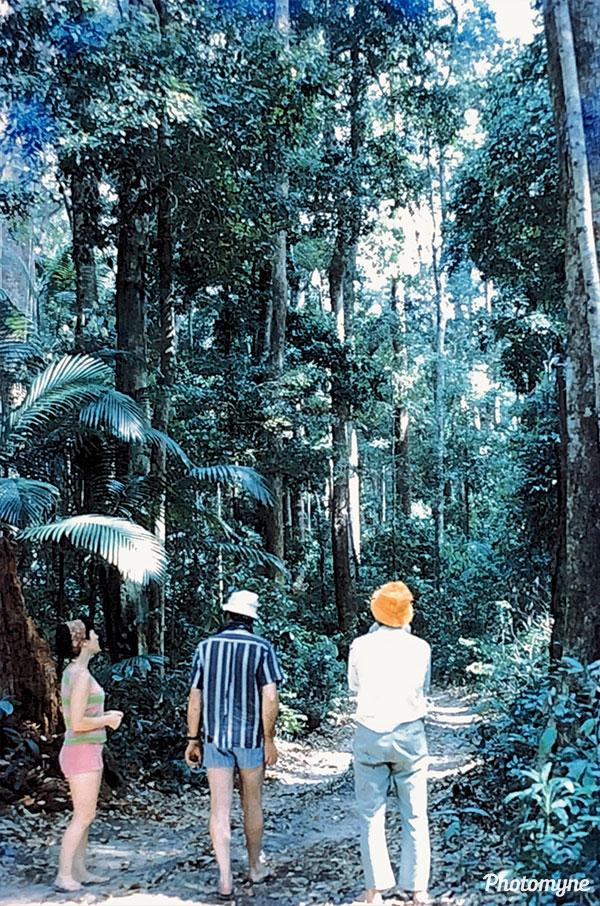 Fraser Experimental Forest. CO, USA 1971
