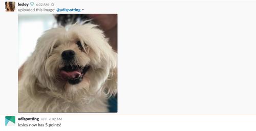 Picture of a dog inside Slack for a Slack bot
