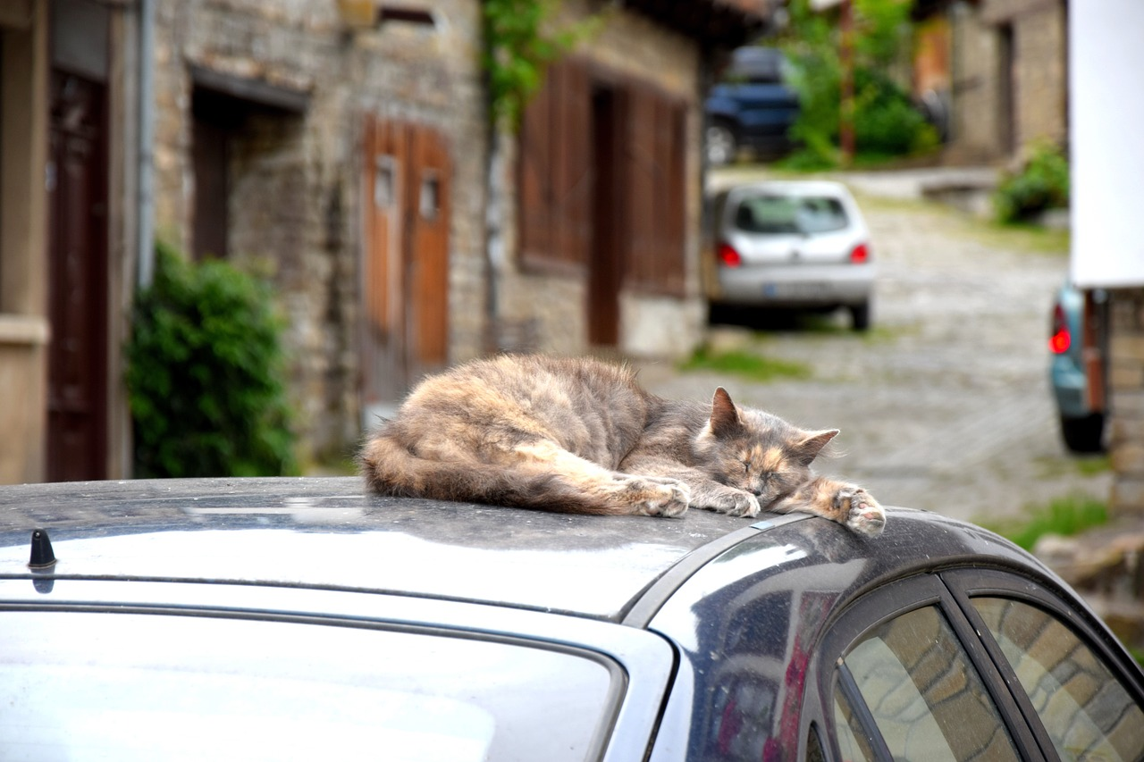 Cat on a car for the cat facts Ruby on Rails app