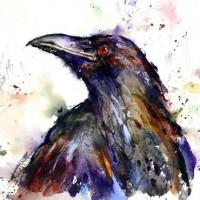Raven8685
