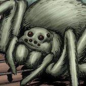 Mr. Web