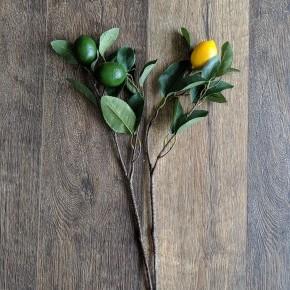 Lemon and Lime Branch