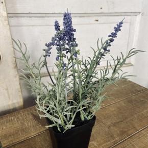 "9"" Potted Lavender"