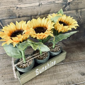 Potted Sunflowers In Wood