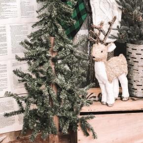 Canadian Pine Tree