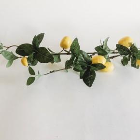 Lemon Stem